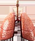 mrt-organov-grudnoj-kletki
